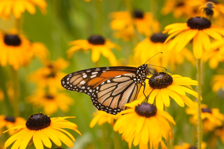 Butterfly near Green Bay Wisconsin by Greg Tucker